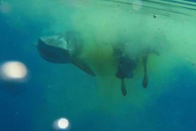 Erau în vacanță pe un vas de croazieră. Au văzut AGITAȚIE în mare și când s-au scufundat să afle ce este au rămas ÎNMĂRMURIȚI! Un rechin uriaș mânca…