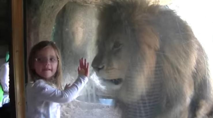 Fetița i-a transmis un sărut zburător, dar peste o secundă s-a întâmplat incredibilul. Video VIRAL