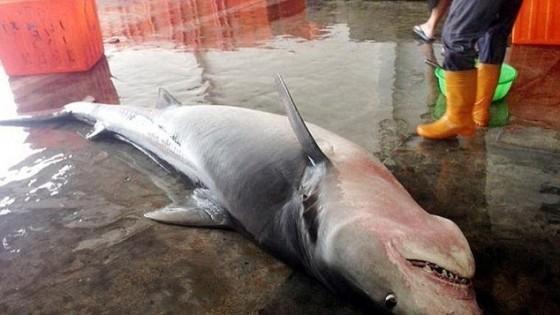 Doi RECHINI au murit în plasele lor, așa că pescarii i-au dus la mâl pentru a le folosi carnea, însă au rămas cu gura căscată când I-AU TĂIAT PE BURTĂ! Ce au găsit în interior…