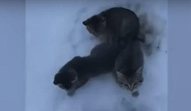 Metoda neobişnuită prin care un bărbat a salvat trei pisoi de la îngheţ