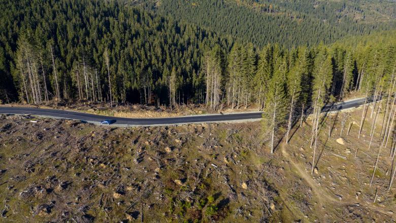 Ministrul Mediului: Cea mai mare tăiere ilegală de arbori – 100.000 metri cubi, în Maramureș. Îi vreau în cătuşe pe toţi!