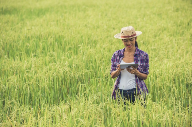 Tinerii pot primi terenuri agricole de la stat. Guvernul a adoptat proiectul de OUG